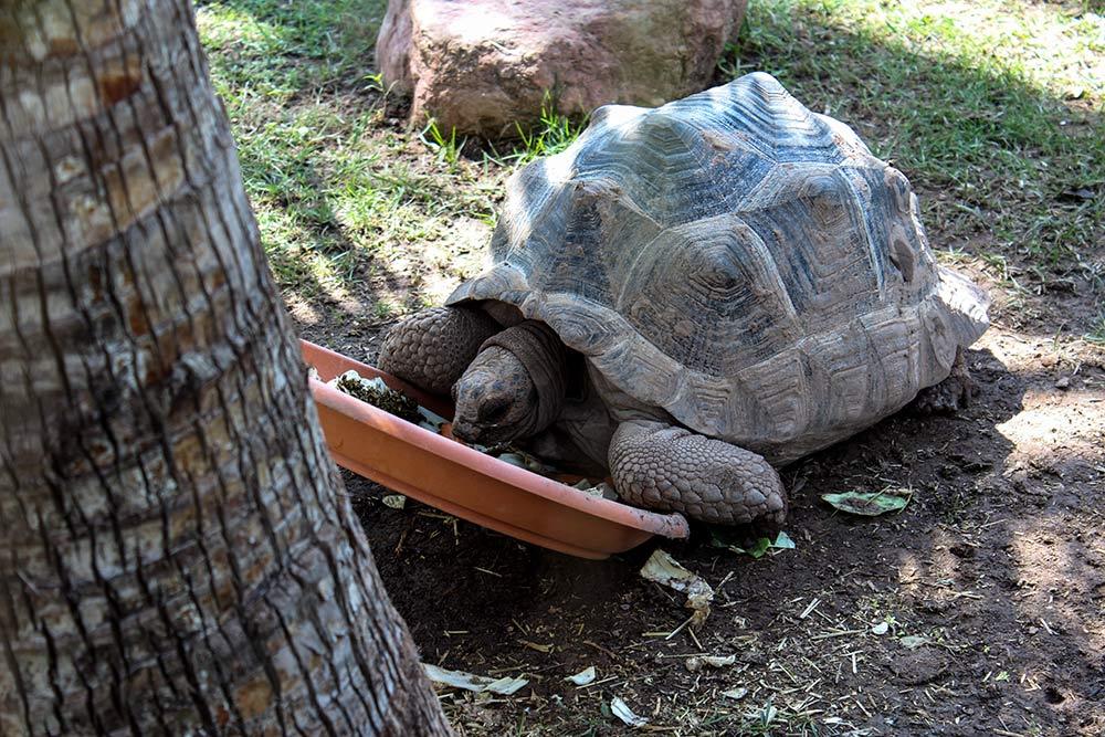 oceanografico turtle