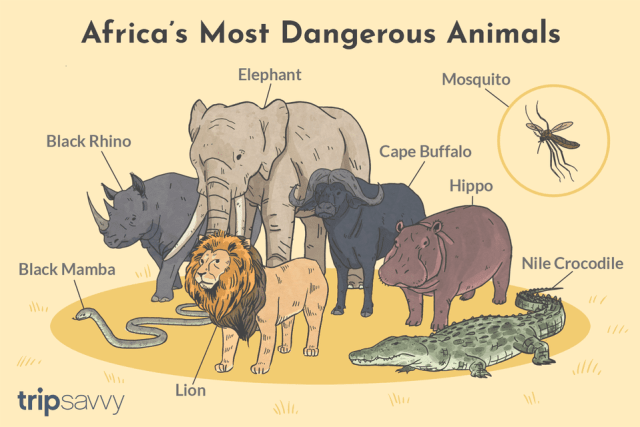 A picture of Africa's Most Dangerous Animals