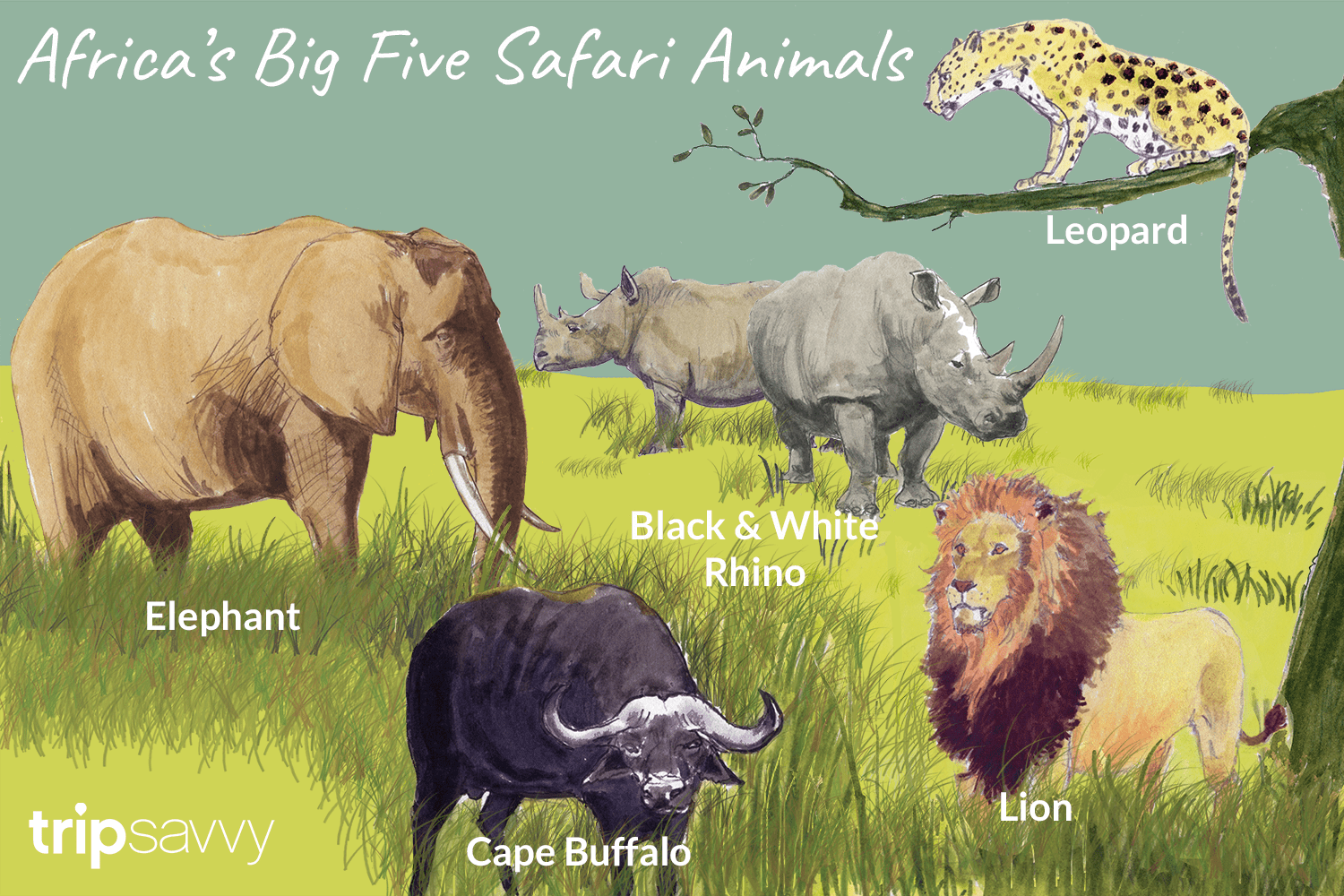 An Introduction To Africa S Big Five Safari Animals