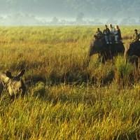 See the One-Horned Rhinoceros at Kaziranga National Park; Sharell Cook; Trip Savvy