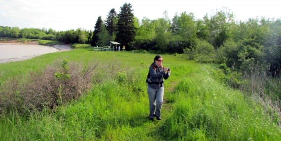 Walking the trail at Maccan Waterfowl Park meant watching for birds, butterflies and mosquitos!