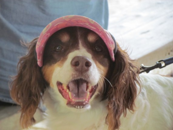 In Flamingo we met a cute puppy who was well dressed in a pink sun visor to protect her eyes from the sun!