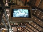 WDW - Animal Kingdom - Kilimanjaro Safari - Deer on TV