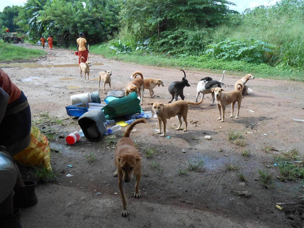 Dog Care Clinic - feeding the strays
