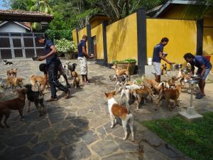 Feeding hungry dogs in Sri Lanka