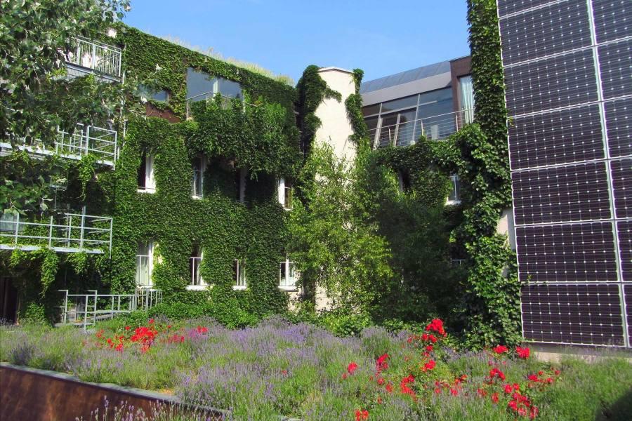 Boutiquehotel Stadthalle vihertää erityisesti kesäisin. Pihalla kasvaa esimerkiksi laventelia. Kuva: Monika Haas / Boutiquehotel Stadthalle