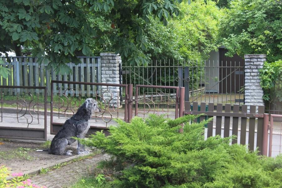Vahtihommissa kesäreissulla Merimetsassa. © tripsteri.fi / Veera Marjamaa