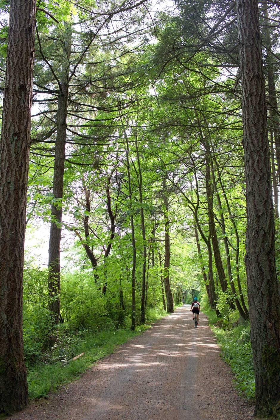 Rantareitti liittyy Lochside Trail -pyörätiehen metsien ja niittyjen keskelle. (c) Alex Kampion/tripsteri.fi