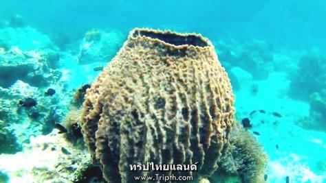 ปะการังอะไรไม่รู้ รูปร่างแปลกดี