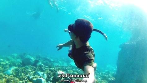 แนวปะการังรอบๆเกาะยักษ์ใหญ่ (2)