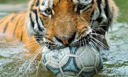 Inflate your soccer ball! Worldwide Day of Play