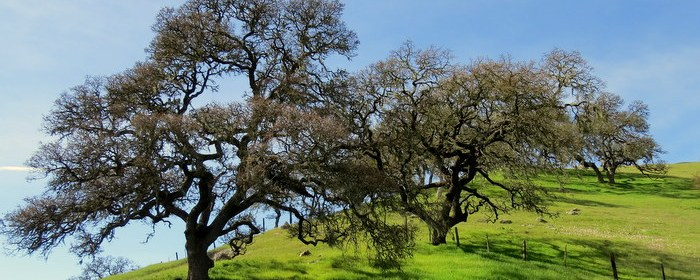 Oaks, Salinas, John Steinbeck country, trip wellness