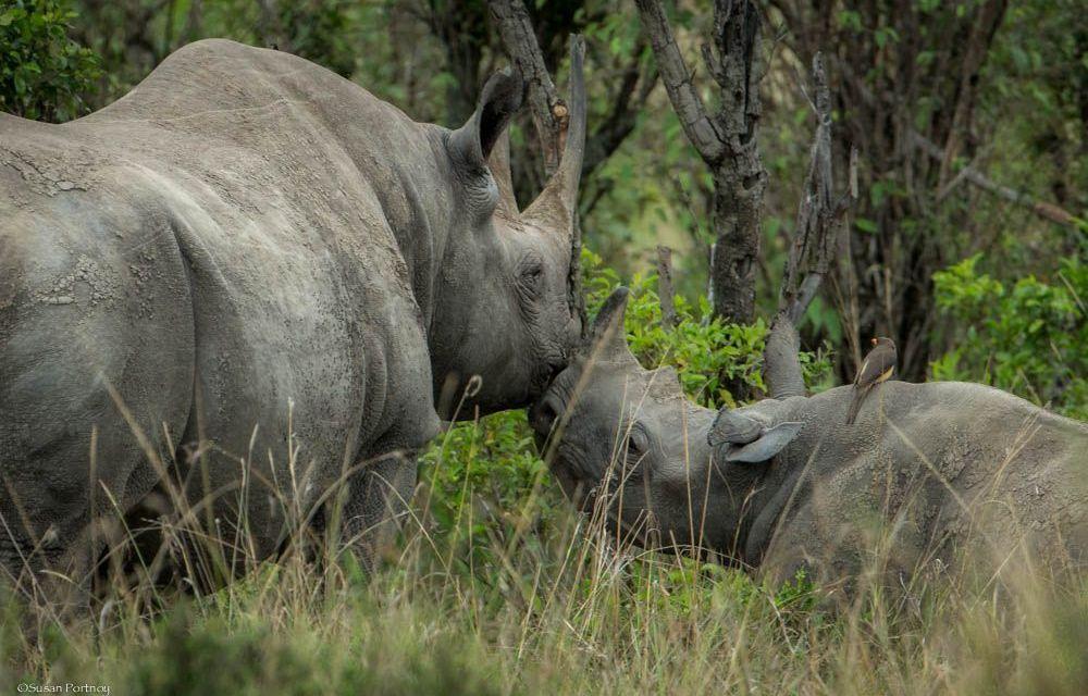 Finite – Save Just One Rhino
