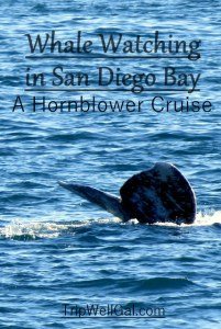San Diego whale watching pinable image