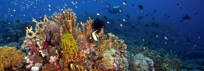 UNESCO World Heritage site, Tubbatha Reef