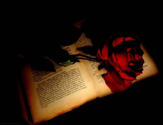 red_rose_on_a_book