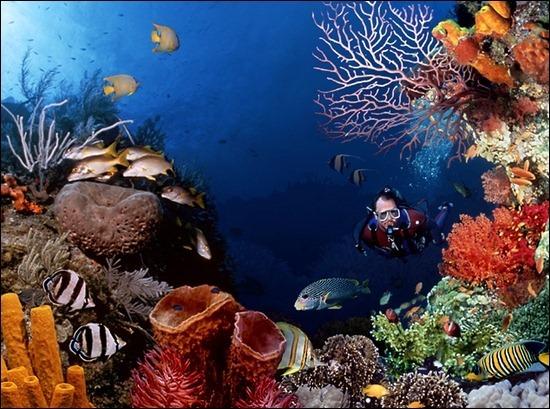 underwater-HD