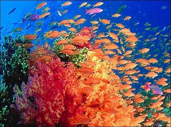 underwater-fishes