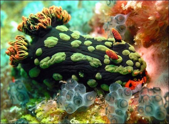 underwater-sea-slugs