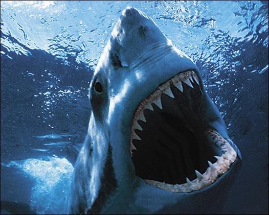 wild-underwater-shark