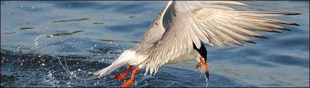 40 Amazing Photos of Birds in Flight for Inspiration