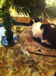 Cat under our Christmas tree 2015 with jingle bells hanging