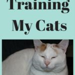 Training a Cat