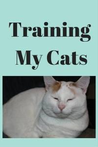 Training My Cats pin