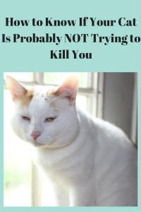 Cat probably not trying to kill you pin