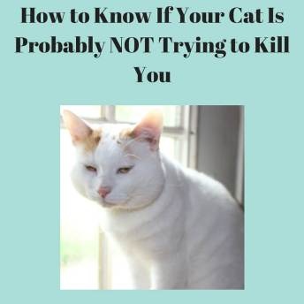 How to Know If Your Cat Is Probably NOT Trying to Kill You