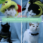 Cat Costume:  Gearing Up for Halloween