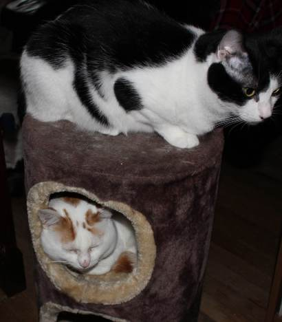Taz and Winnie love the cat condo after a spritz of cat spray.