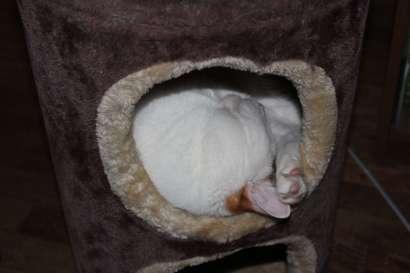 Catnip spray encouraged Taz to nap inside.