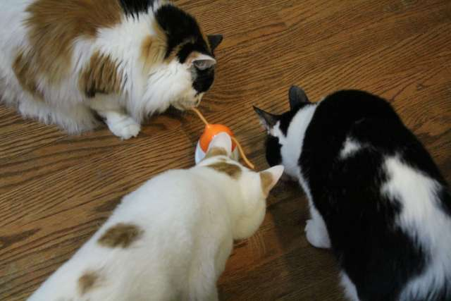 The cats are loving the Friskies Pull N Play cat treats.