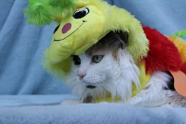 Callie is wearing a Caterpillar Cat Costume