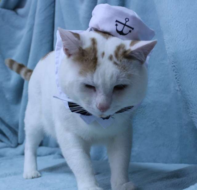 Razzmatazz dressed up like a Sailor in his Cat Costume