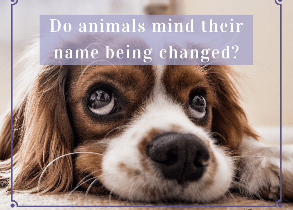 Do animals mind their name being changed