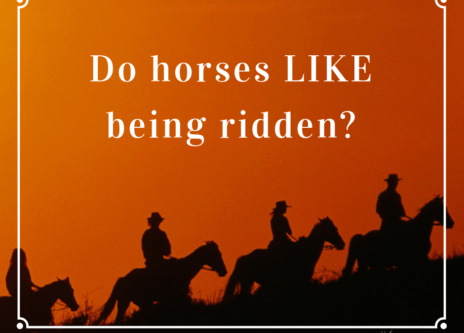 Do horses like being ridden?  As a Horse Communicator it was time to find out.