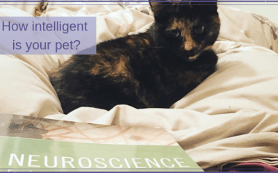 How intelligent is your pet?