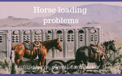 Horse loading problems