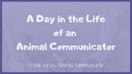 A day in the life of an Animal Communicator, what I do all day