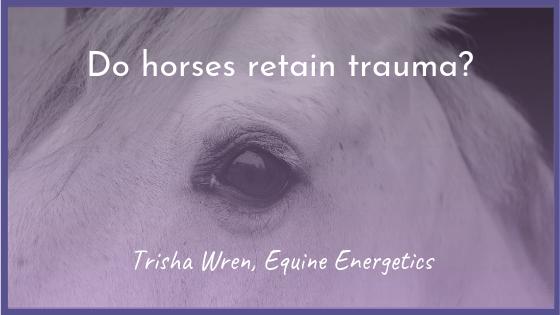 Do horses retain trauma?