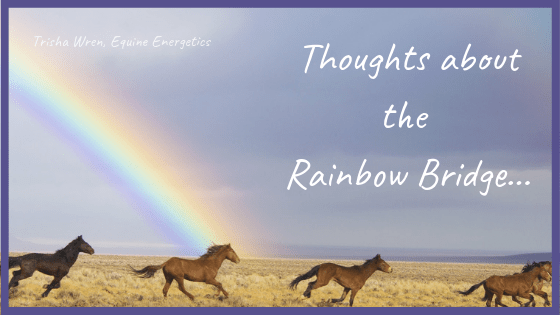 rainbow bridge horse grief