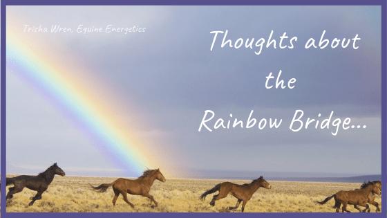 rainbow bridge horse grief