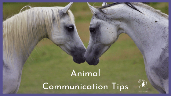 animal communication tips
