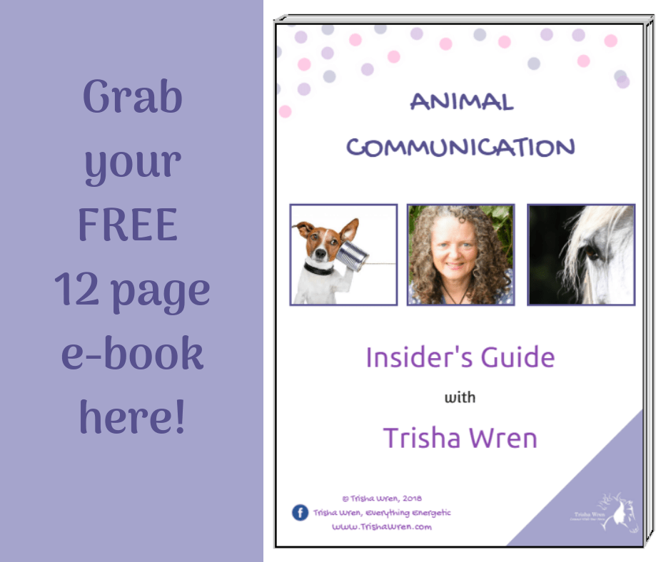 insiders-guide-to-animal-communication
