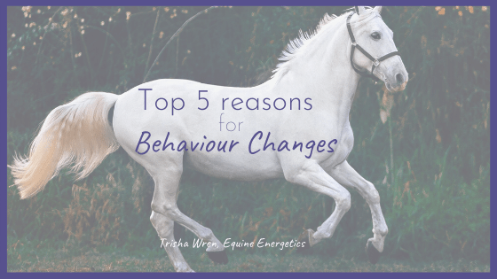 The top 5 reasons your horse's behaviour has changed