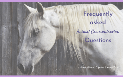 Frequently asked Animal Communication questions