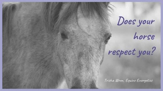 does your horse respect you
