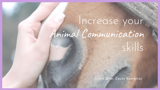 Increase Your Animal Communication Skills